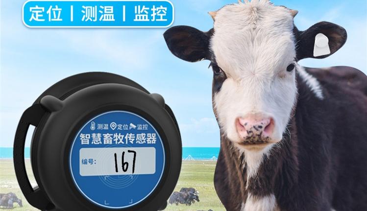 智慧养殖RFID测温定位电子耳标
